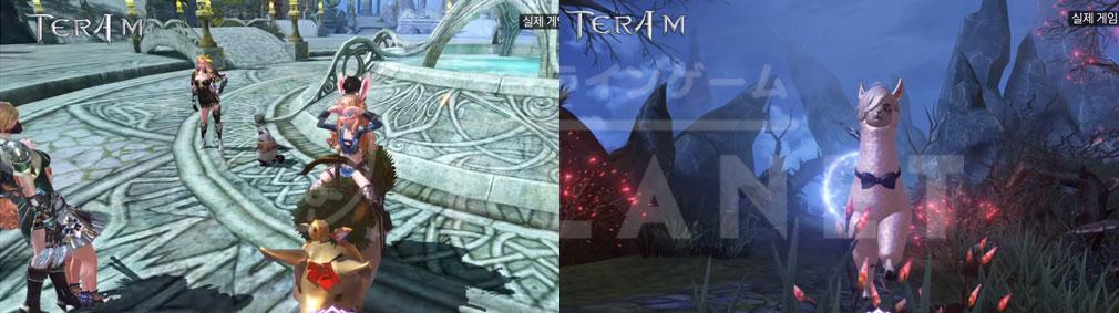TERA M (テラM) 地上の騎乗ペット『ミニブタ』、『アルパカ』スクリーンショット
