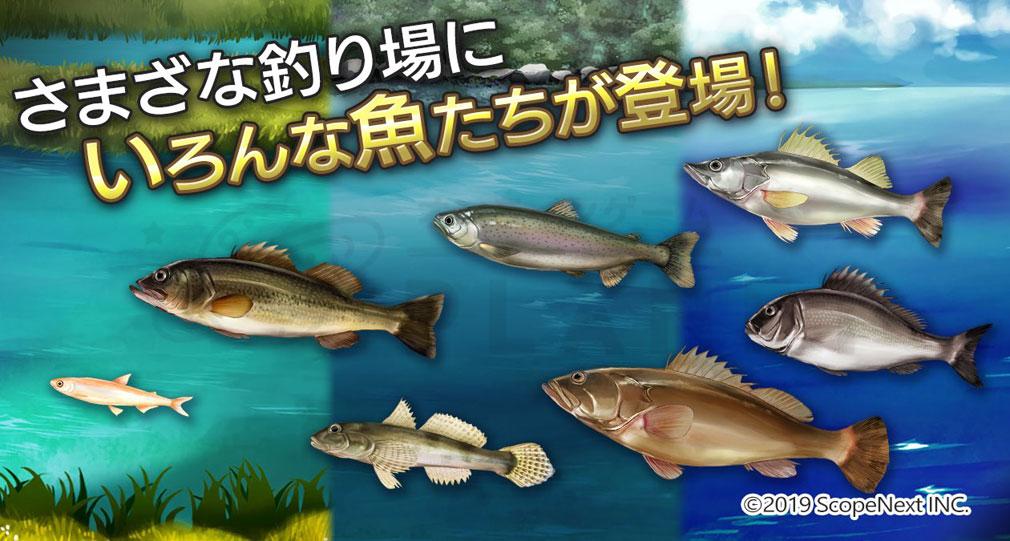 釣りコレクション(ツリコレ) 色んな魚紹介イメージ