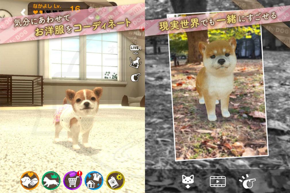 with My DOG 犬とくらそう(犬くら) コーディネート、記念撮影紹介イメージ