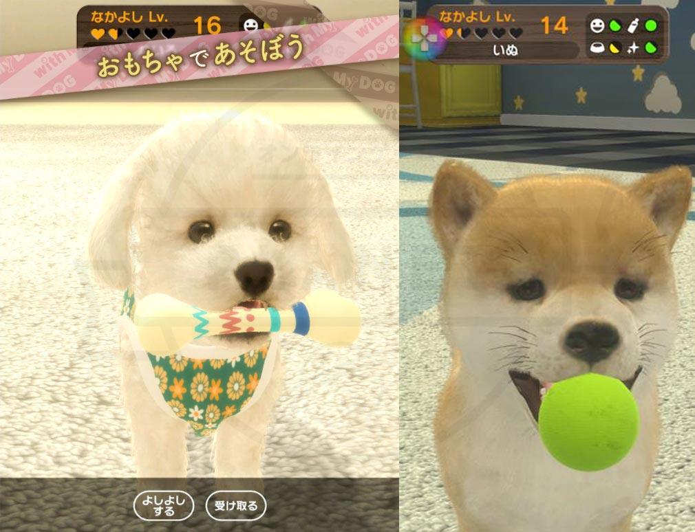 with My DOG 犬とくらそう(犬くら) おもちゃで遊ぶ紹介イメージ