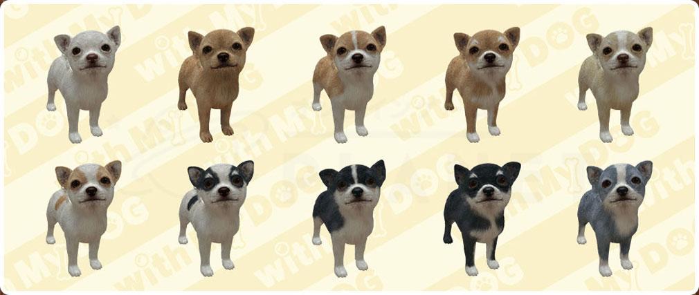 with My DOG 犬とくらそう(犬くら) チワワのバリエーション紹介イメージ