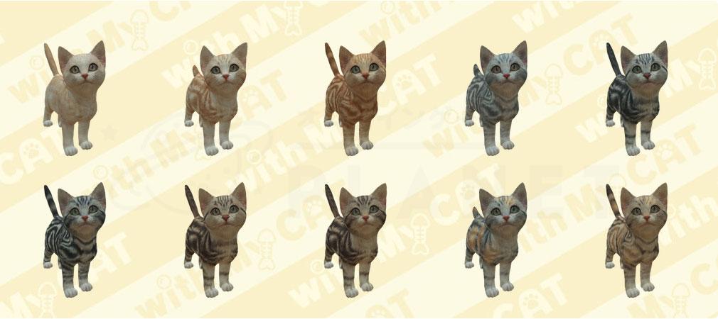 with My CAT 猫とくらそう (猫くら) アメリカンショートヘア紹介イメージ