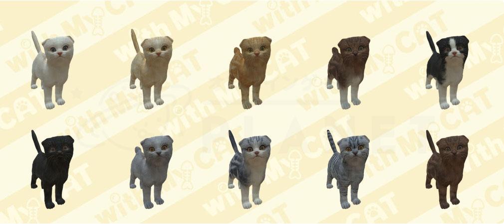 with My CAT 猫とくらそう (猫くら) スコティッシュフォールド紹介イメージ