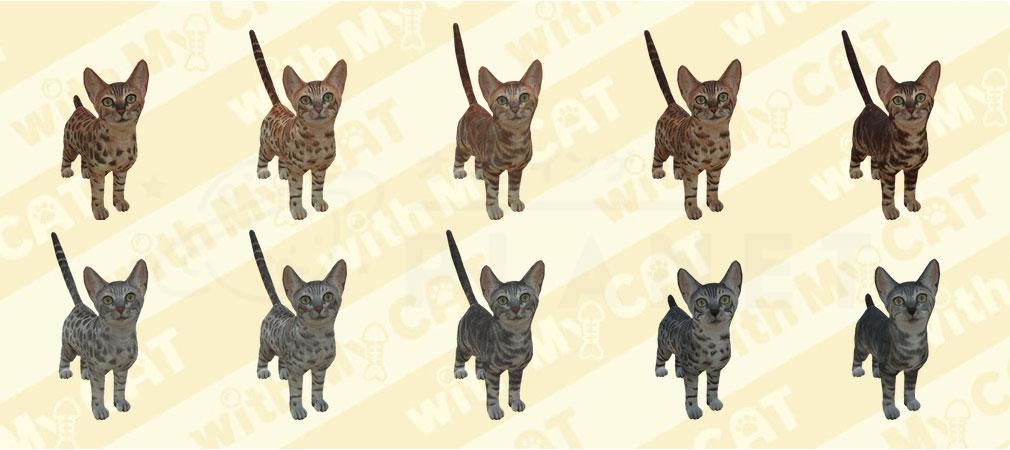 with My CAT 猫とくらそう (猫くら) ベンガル紹介イメージ