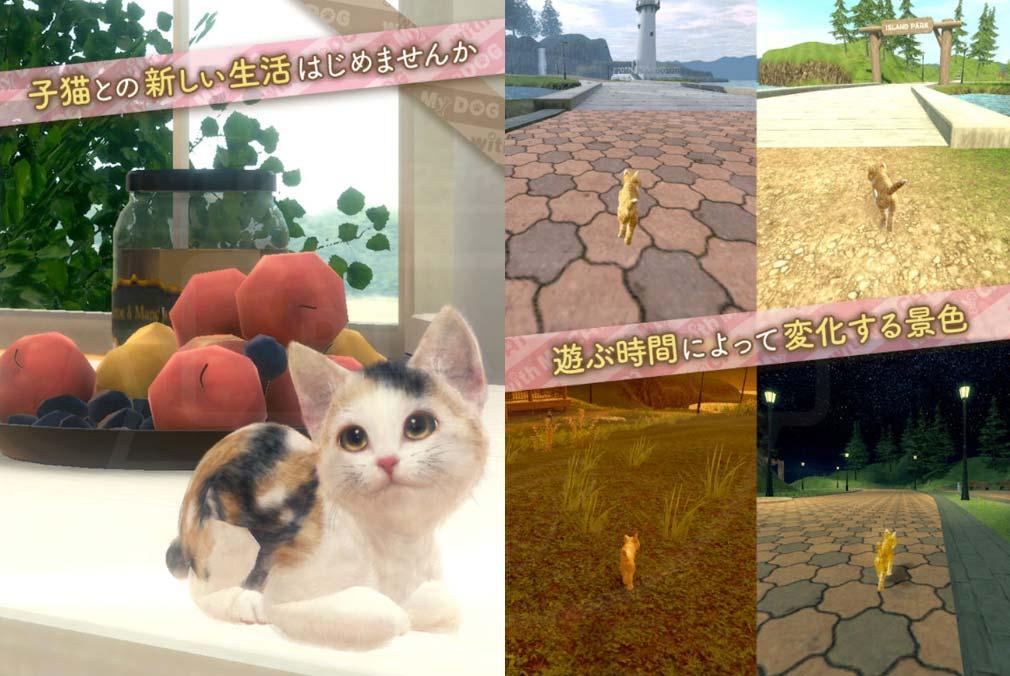 with My CAT 猫とくらそう (猫くら) 子猫との新しい生活、景色変化紹介イメージ
